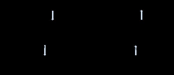 OSI Model - Presentation Layer
